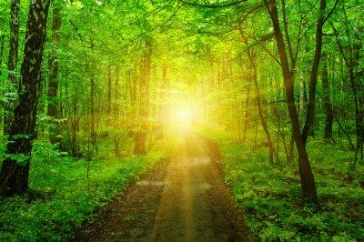 Fototapet Skog och sol