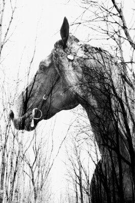 Fototapet Skogen inuti häst ina konst, multiexposition