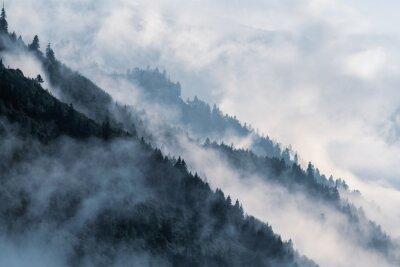 Fototapet Skogsbadsläge i låglövdalen dimma med silhuetter av ständigt gröna barrträd som höljs i dimma.