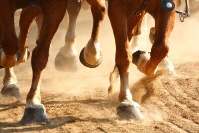 Fototapet Snabbt växande hästhovar
