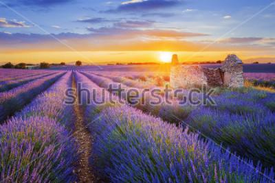 Fototapet Solen ligger över en vacker lila lavendel som arkiveras i Valensole. Provence, Frankrike