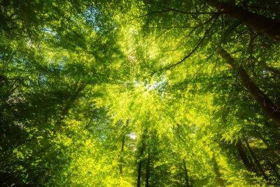 Fototapet Solljus på canopy