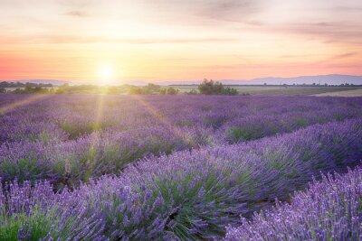 Fototapet Solnedgång i Provence