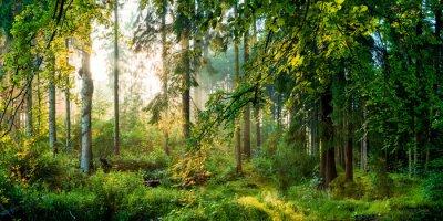 Fototapet Soluppgång i skogen