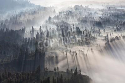Fototapet Soluppgång i skogen nära Bromo vulkan, Java ö, Indonesien