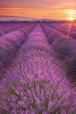 Fototapet Soluppgång över lavendelfält i Provence, Frankrike