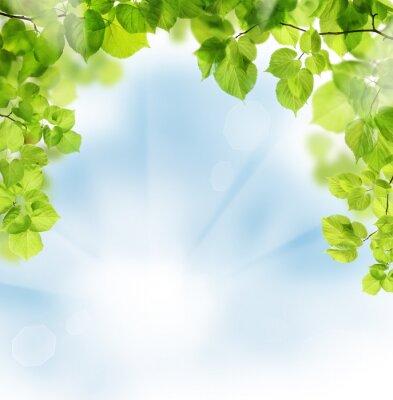 Fototapet Sommar lämnar på blommig grönska bakgrund