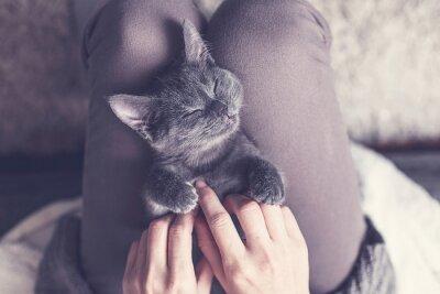 Fototapet Söt kattunge tar en tupplur