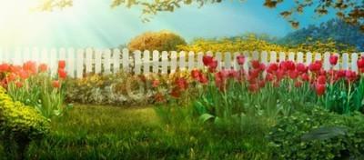 Fototapet Spring garden. Red tulips in garden Spring grass with flowers