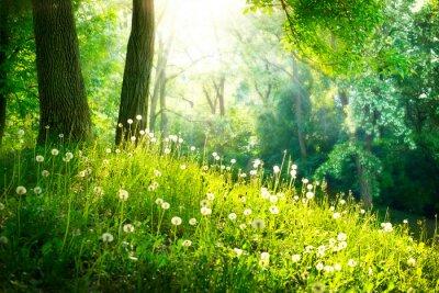 Fototapet Spring Nature. Vackert landskap. Grönt gräs och träd