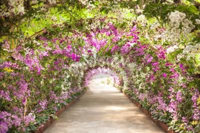 Fototapet stig i en botanisk trädgård med orkidéer kantar vägen.