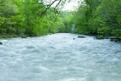Fototapet Stream i grön skog