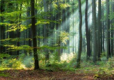 Fototapet Sunny morning in green forest