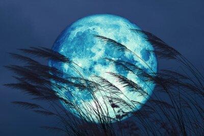 Fototapet super full harvest moon on night sky back grass flower in the field