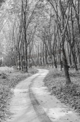 Fototapet Svart och vitt av vägen till skogen