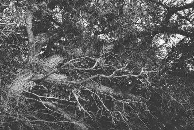 Fototapet Svart och vitt Närbild på vridna avlövade grenar. organisk b