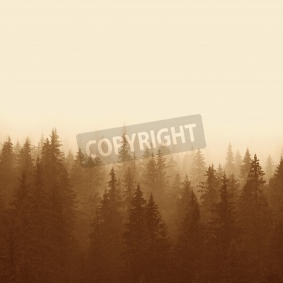 Fototapet tallskog i bergen med dimman
