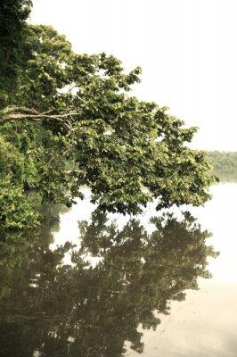 Fototapet Tambopata Province Utomhus