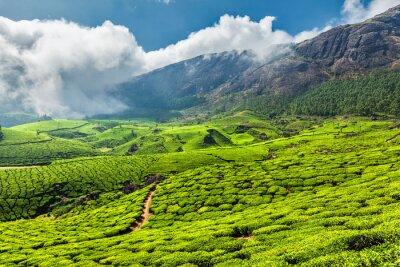 Fototapet Teplantager i Indien