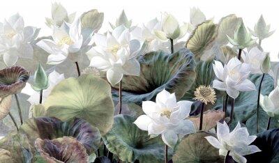 Fototapet The scenic Lotus flowers.