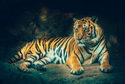 Fototapet tiger med sten berg bakgrund i mörk dyster majestätisk farliga, skrämmande känsla färgeffekt.