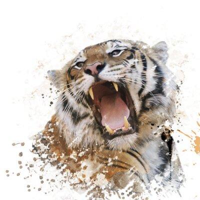 Fototapet Tiger porträtt vattenfärg