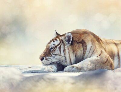 Fototapet Tiger som vilar på en klippa