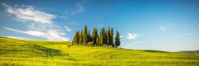 Fototapet Toscana på våren
