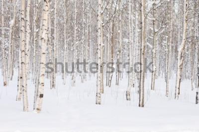 Fototapet Träd i parken eller skogen i vintersnö