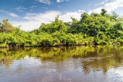 Fototapet Träd kantar floden Yacuma i Bolivia