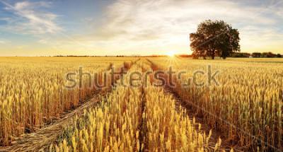 Fototapet Träd och vete fält