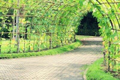 Fototapet Träd tunnel vinklade Luffa växt