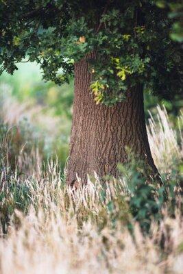 Fototapet Trädkorg mellan långgult gräs.