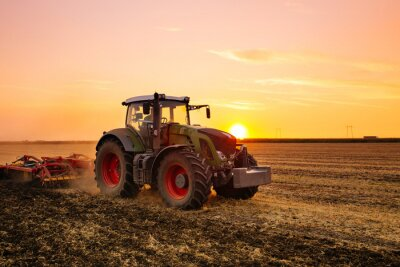 Fototapet Traktor på korn fältet vid solnedgången.