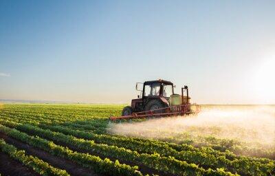 Fototapet Traktor sprutning sojafält