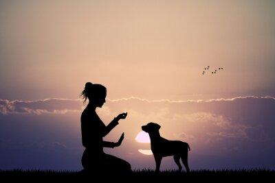 Fototapet tränad hund vid solnedgången