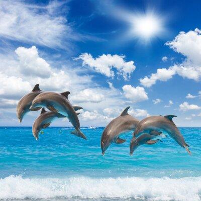 Fototapet tre hoppande delfiner