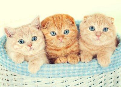 Fototapet Tre små kattungar i korgen