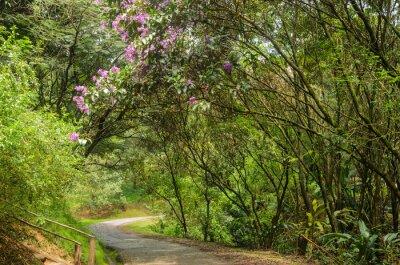 Fototapet trilha entre árvores