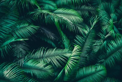Fototapet tropical forest natural background, nature scene in green tone style