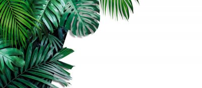 Fototapet Tropical leaves banner on white background with copy space