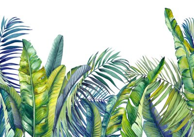Fototapet Tropical palm and banana leaves. Jungle wallpaper. Isolated watercolor background.