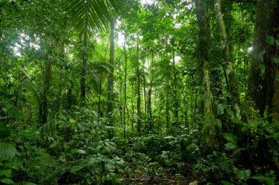 Fototapet Tropisk regnskog landskap, Amazon