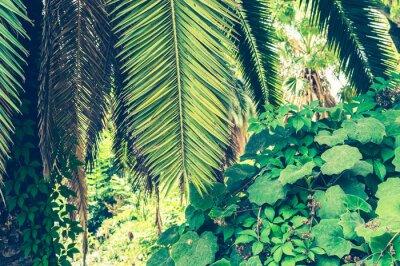 Fototapet Tropiska bakgrunden av palmblad