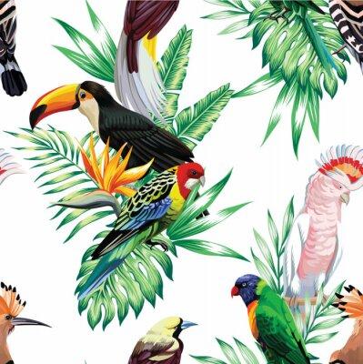 Fototapet tropiska fåglar och palmblad mönster