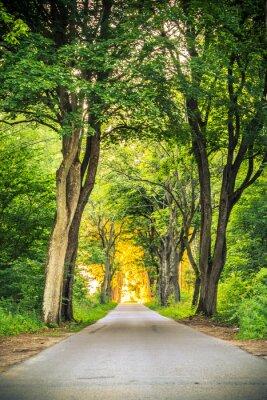 Fototapet Trottoar gränd väg med träd i parken.