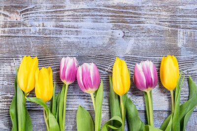 Fototapet Tulip blommar på trä Bakgrund