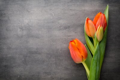 Fototapet Tulpan, orange på grå bakgrund.