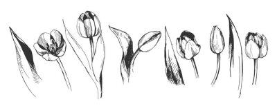 Fototapet tulpanblomma grafisk illustration dekorativ natur konst