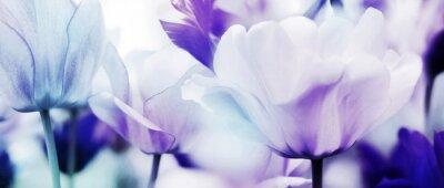 Fototapet tulpaner cyan violett ultra ljus